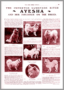 Article: Ayesha, The Dog World Annual, 1926