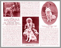 Article: The Samoyede Doyen, 1912
